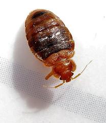 bugpic