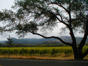 napa-valley-california-2-586030-m.jpg