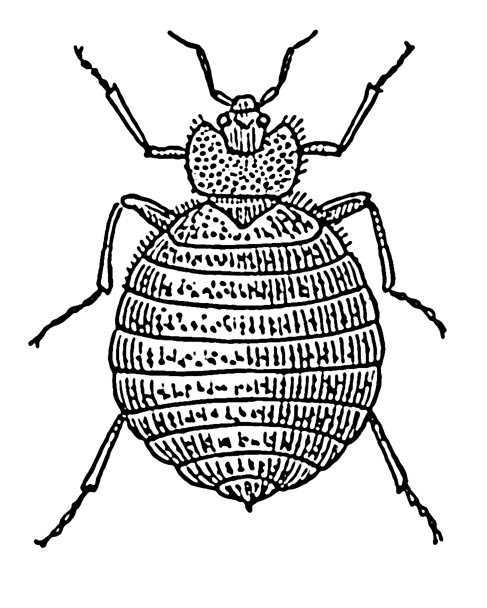 Bed Bug Diagram - Electrical Wire Symbol & Wiring Diagram •