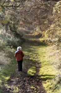 Woodland-Path-342-196x300