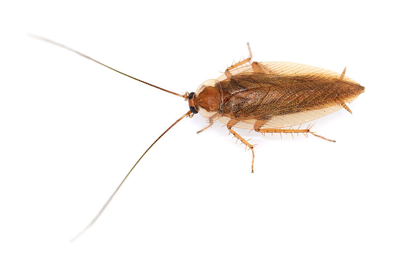 Apartment Building Has Roaches cockroaches have invaded my apartment. what can i do? — san